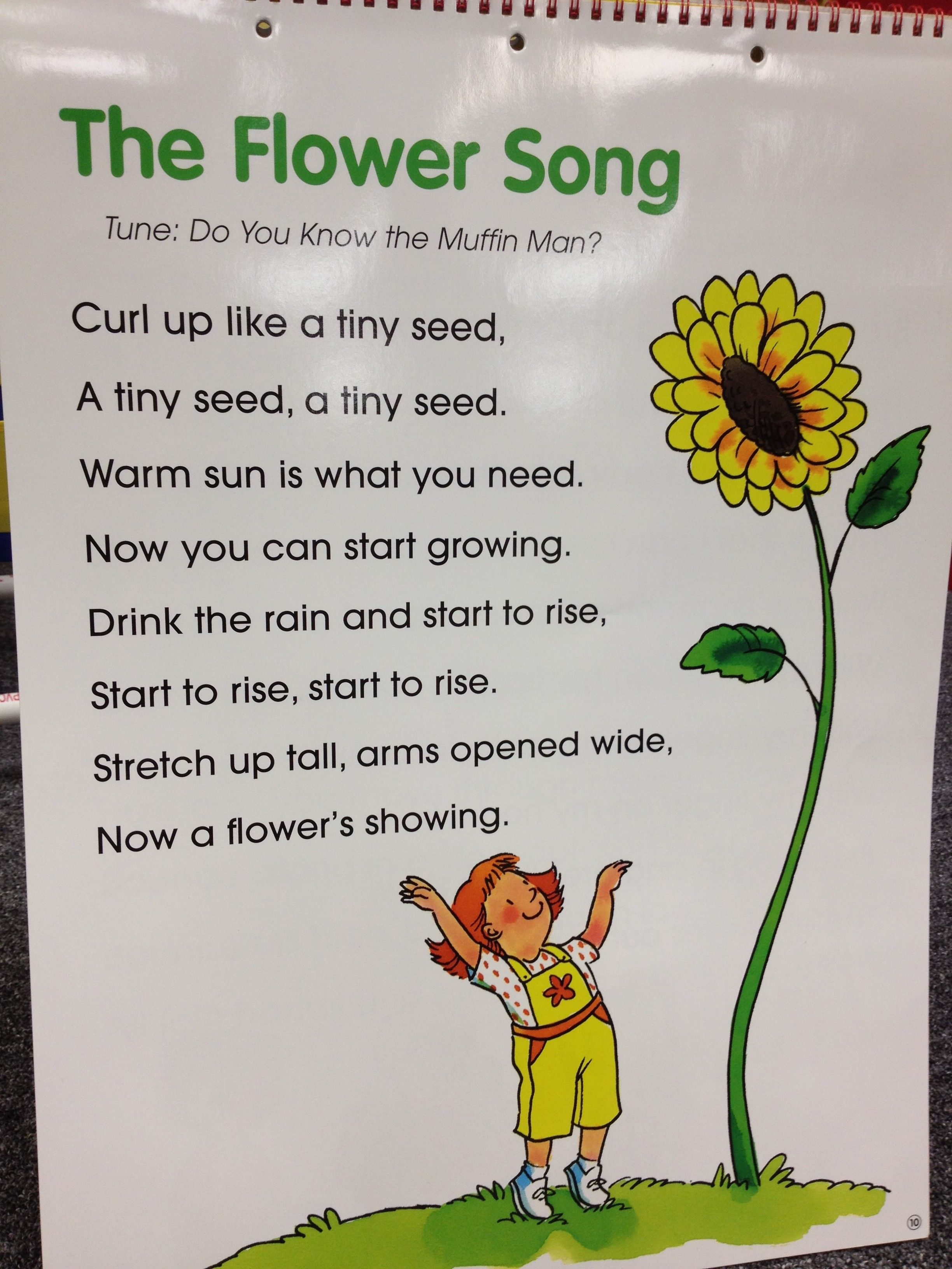 The Flower Song Science Life Cycles Pinterest Songs Rain Shower And Flower