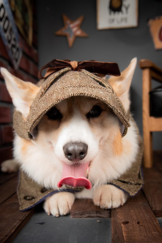 Tweed Deerstalker Hat With Ear Holes For Dog Herringbone Etsy Deerstalker Hat Deerstalker Ear Hats