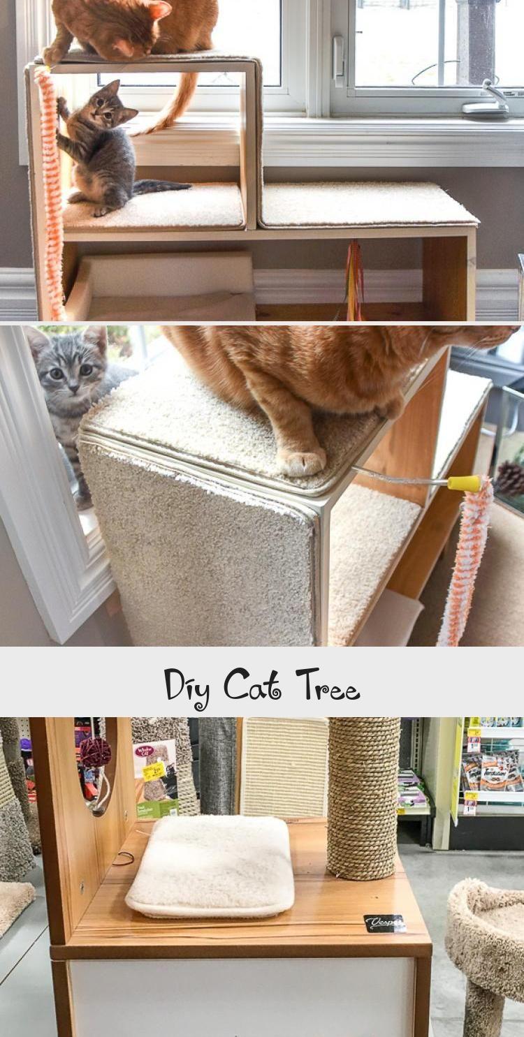My Blog En Blog In 2020 Diy Cat Scratching Post Diy Cat Tree Cat Playground
