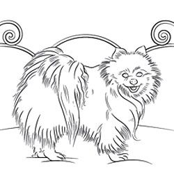 Pomeranian Coloring Page Dog Patterns Dog Coloring
