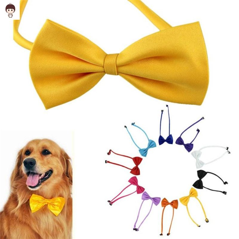 Beautiful Dog Collar Bow Adorable Dog - 1565ba8e082581e4799c46a2ff4a4bd7  Gallery_100128  .jpg