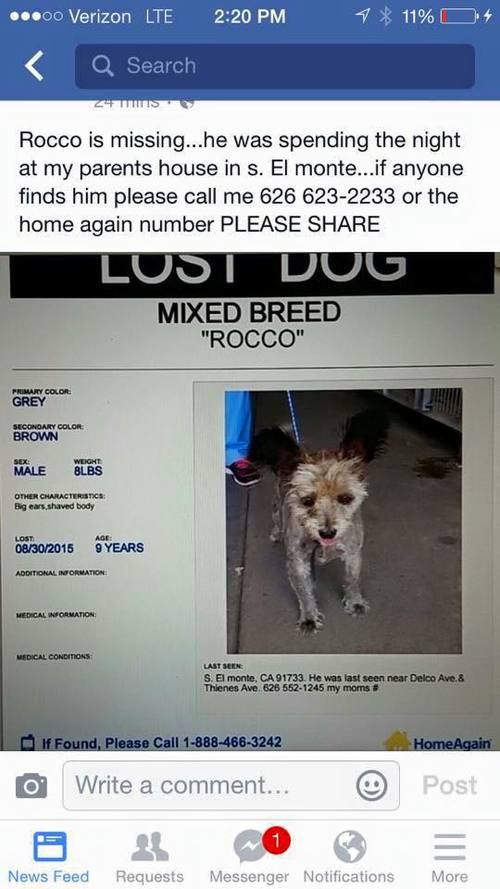 Reunited With Owner Courtesy Posting Rocco Was Found And