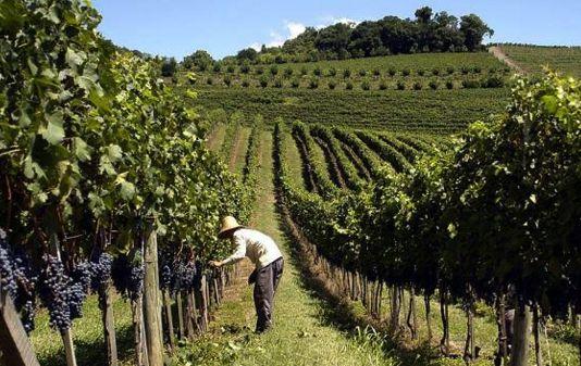 Vignobles du monde : Le Brésil - Magazine du vin - Mon Vigneron