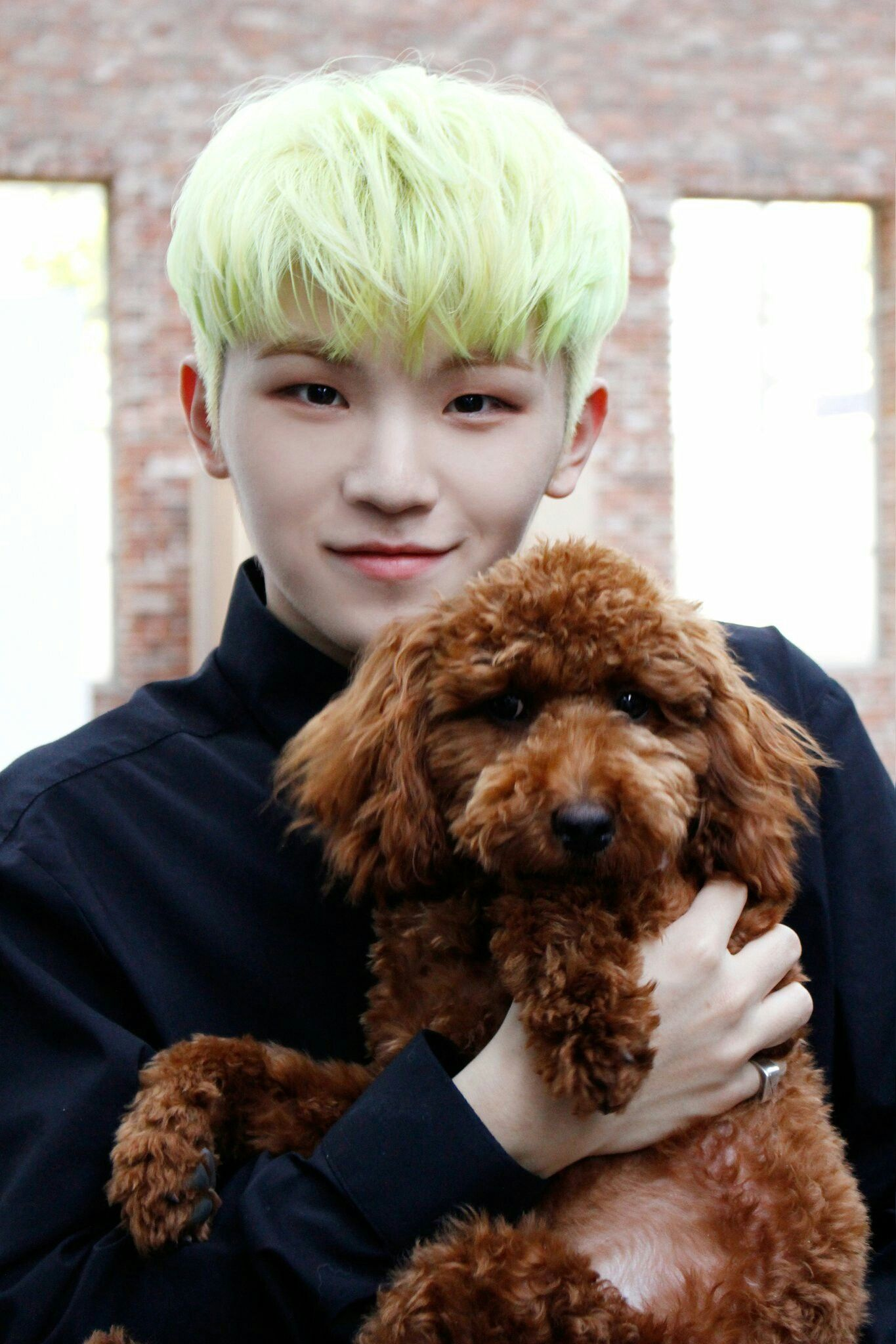 Update 17 Year Old Hartland Boy Located And Safe: Twitter @pledis_17 Update~ Who Is Cuter? The Dog Or Woozi