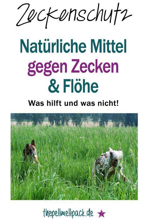 Naturliche Mittel Gegen Zecken Und Flohe Mittel Gegen Zecken Flohe Hund Zecken