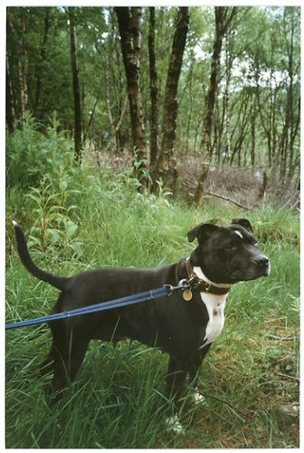 Tess At The Woods Of Cree Dogs Dogs Puppies Group Of Dogs