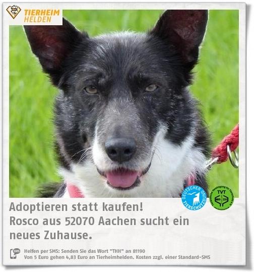 Rosso Sucht Im Tierheim Aachen Ein Hundeerfahrenes Zuhause Https Www Tierheimhelden De Hund Tierheim Aachen Border Collie Mi Tierheim Tiere Hunde