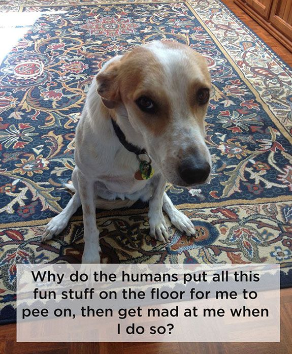 11 Humorous Dog Thoughts Dog Thoughts Dog Life Dogs