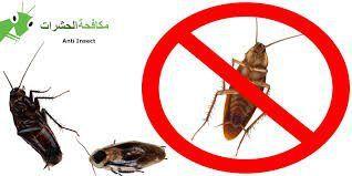 شركة مكافحة حشرات بمكة النور الدولية لرش المبيدات بمكة