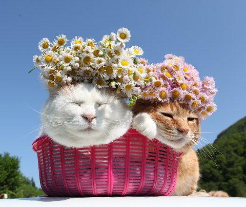 ハルジオン |のせ猫オフィシャルブログ Powered by Ameba