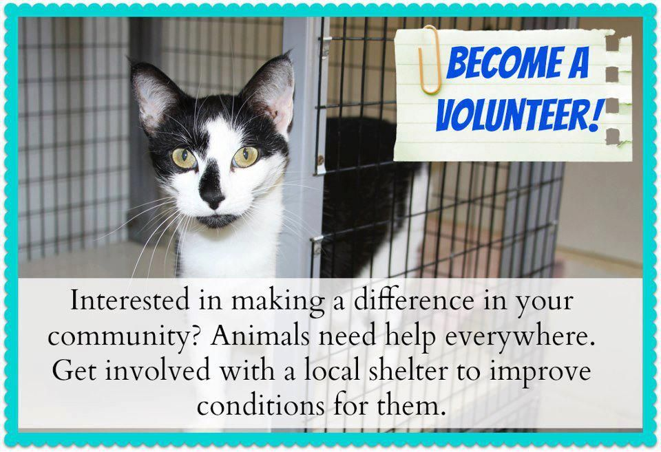 Volunteer Volunteer Animal Rescue Animals