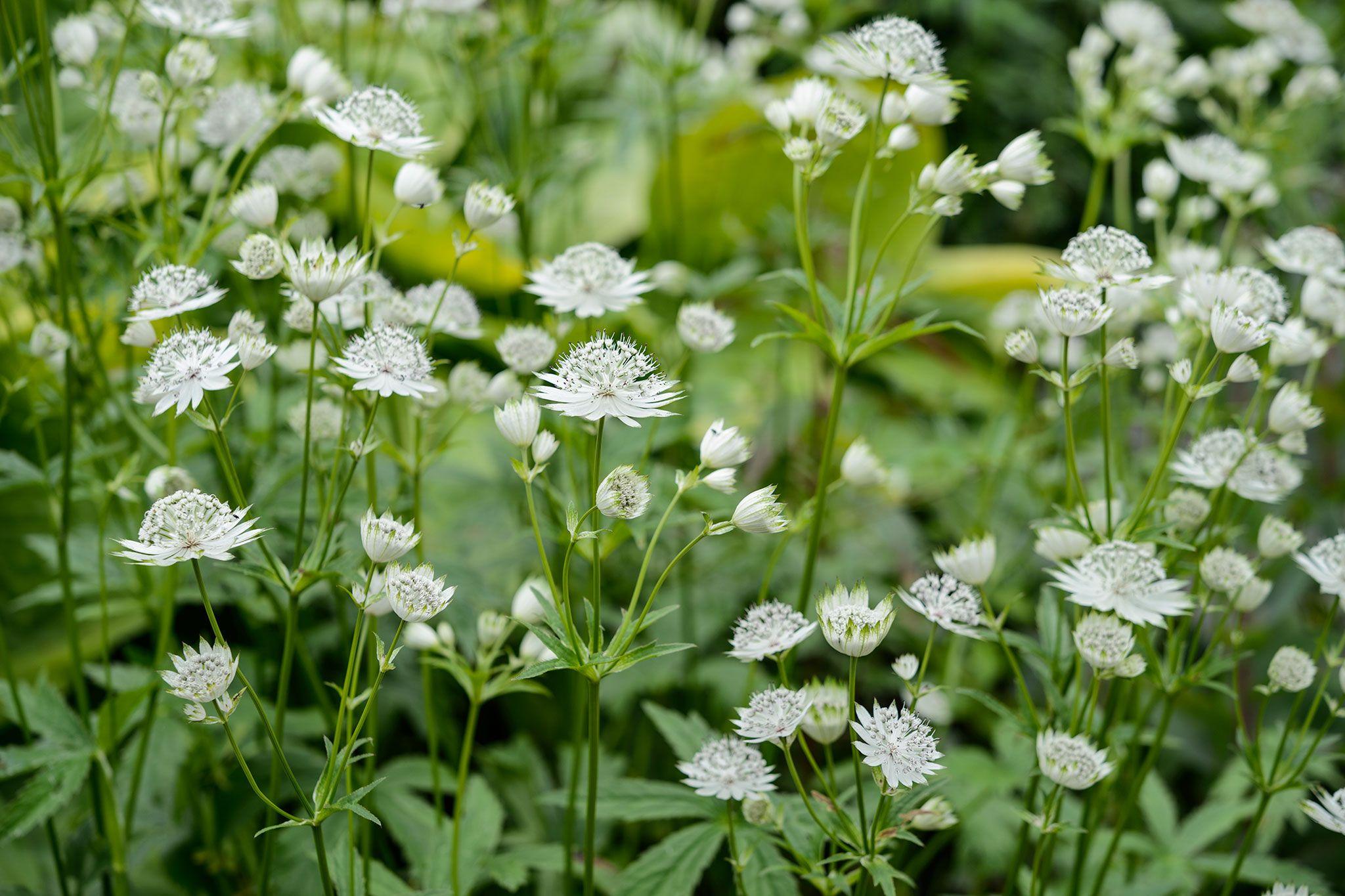 The best shadeloving plants north facing border ideas Pinterest