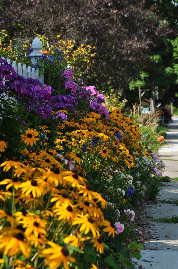 Sidewalk side yard front yard less grass flowers gardening landscaping brighten your day - Flowers for the front yard ...