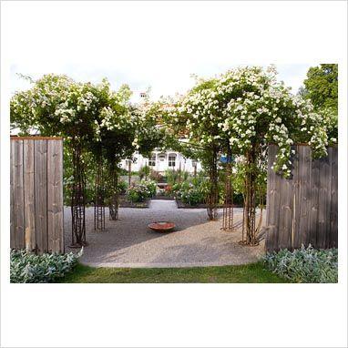 contemporary garden climbing rose - Google Search
