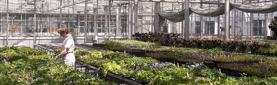 Job Opportunities at the Missouri Botanical Garden
