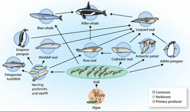Marine Food Web Yahoo Image Search Results School Pinterest