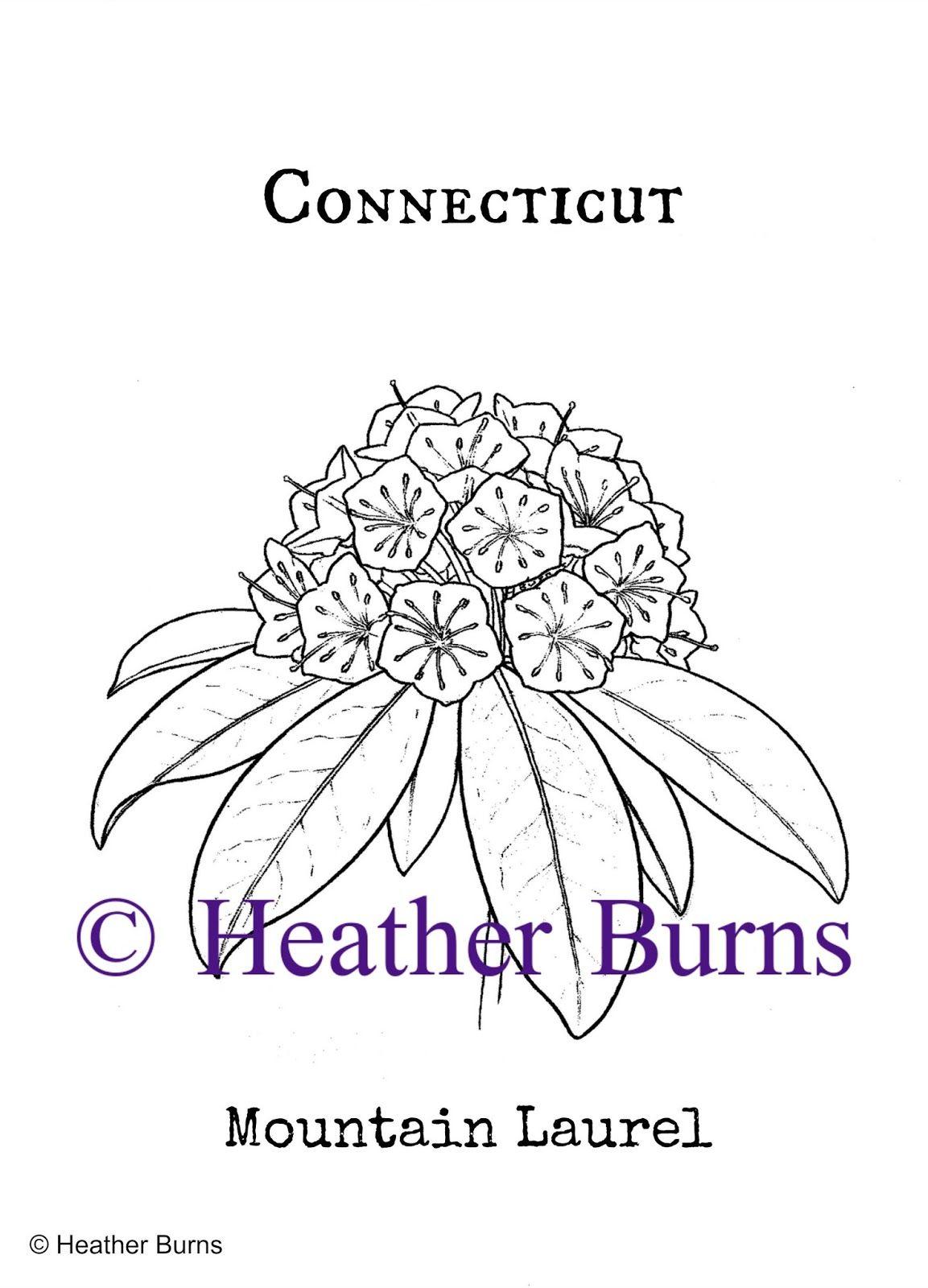 Connecticut Mountain Laurel Coloring Books Flower Coloring