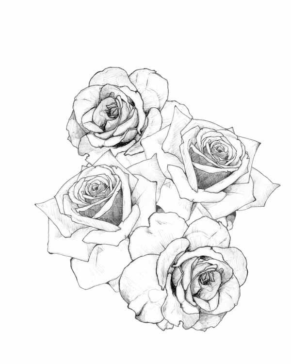 Rose Tattoo Designs Rose Tattoos Designs3 Hd Wallpapers Fan Full Hd Wallpapers 1080p Rose Tattoo Design Rose Tattoos Tattoos