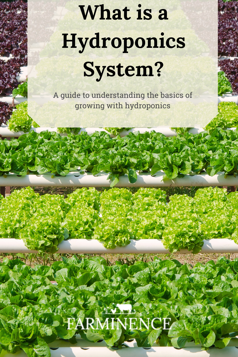 What Is A Hydroponics System A Guide To Understanding Hydroponics In 2020 Hydroponics System Hydroponics Hydroponic Growing