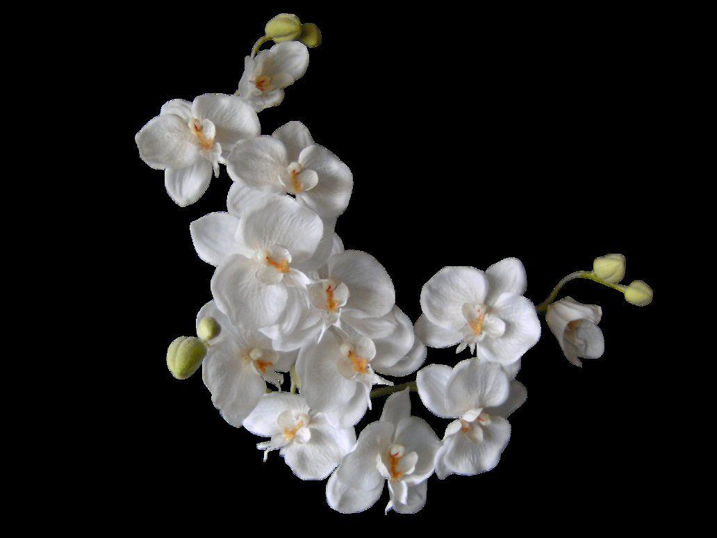 фото белая ветка орхидеи цена обусловлена сложностью