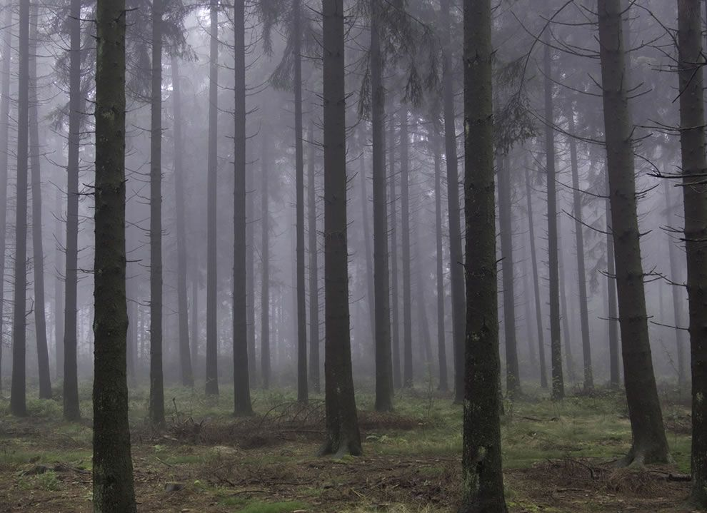When The Woods Are Scary Enchanted Forests Like Brothers Grimm