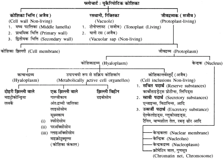 for Class 11 Biology Chapter 6 कोशिका (With images) Cell