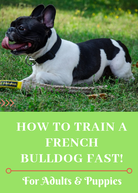 How To Train A French Bulldog Here S What Worked For Me French Bulldog Training Your Dog Dog Training