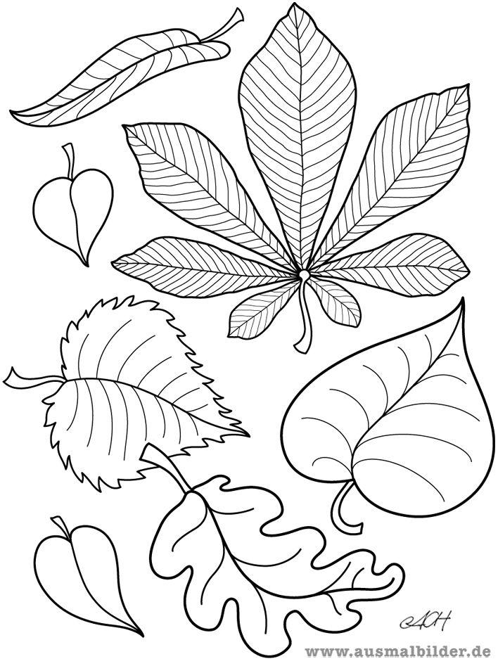 Ausmalbilder Blätter 01 Wald