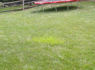 Pictures of lawn weeds helpful do it yourself lawn care tips and pictures of lawn weeds helpful do it yourself lawn care tips and advice get the dirt on planting and growing grass weed identification mowing watering solutioingenieria Gallery