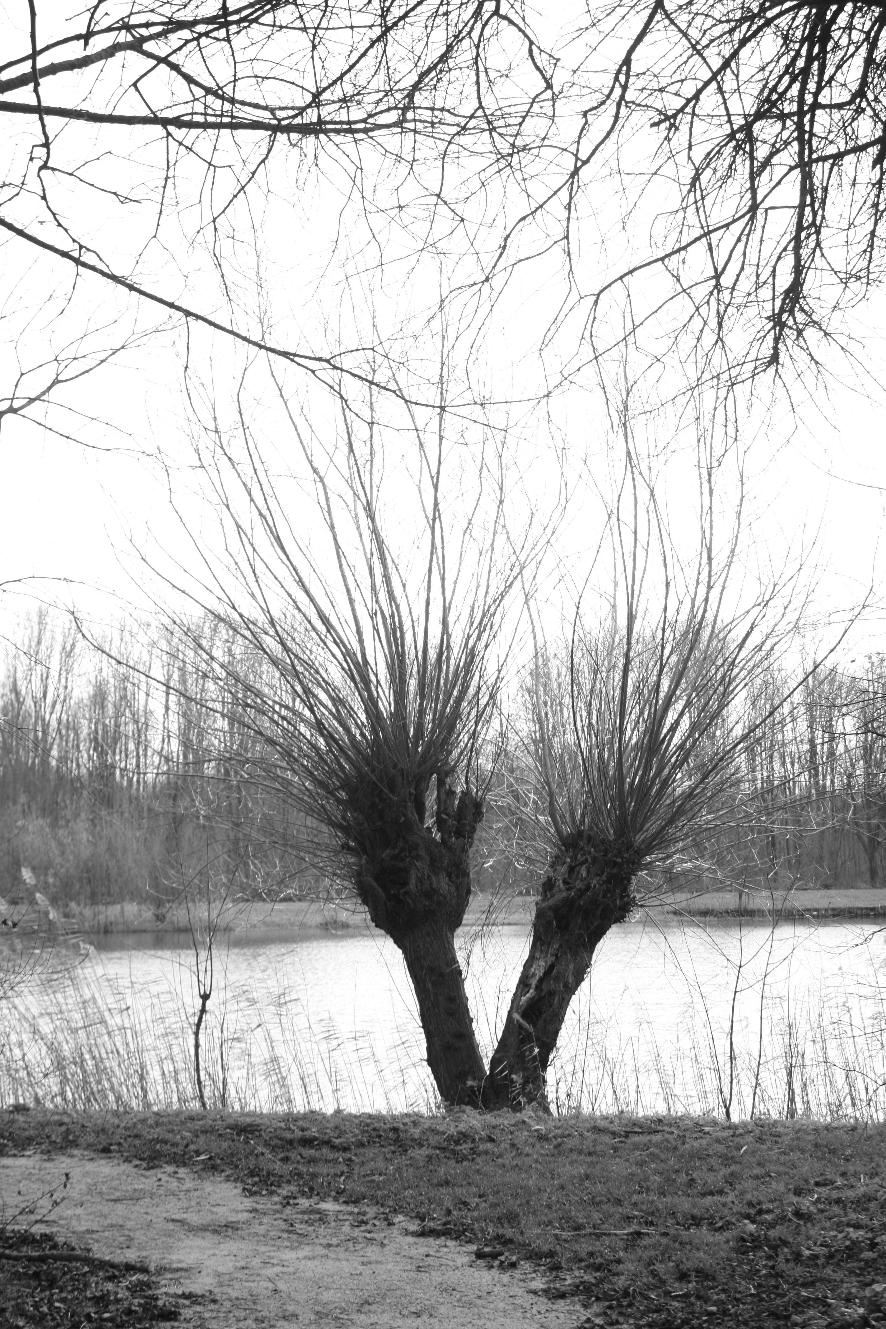 Natuur rond Biddinghuizen