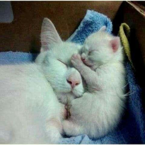 Mother Ans Baby Cute Animals Cats Newborn Kittens
