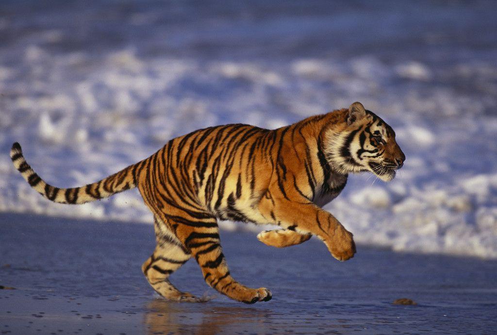 Tiger Power Tools