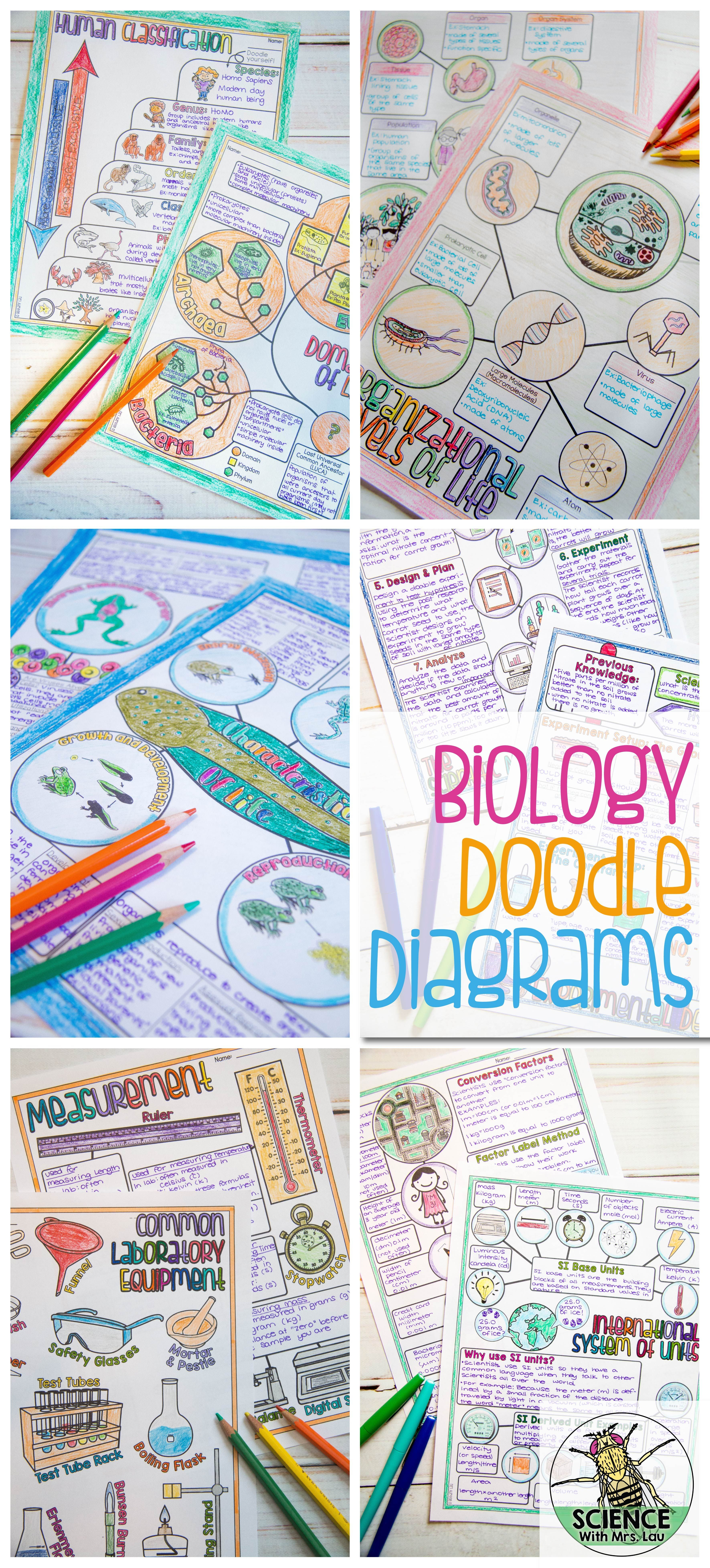 These Biology Doodle Diagrams Work Great For Helping Students Who Have Trouble Taking Notes They Re Like Lit Biology Classroom Teaching Biology Science Notes [ 7823 x 3542 Pixel ]