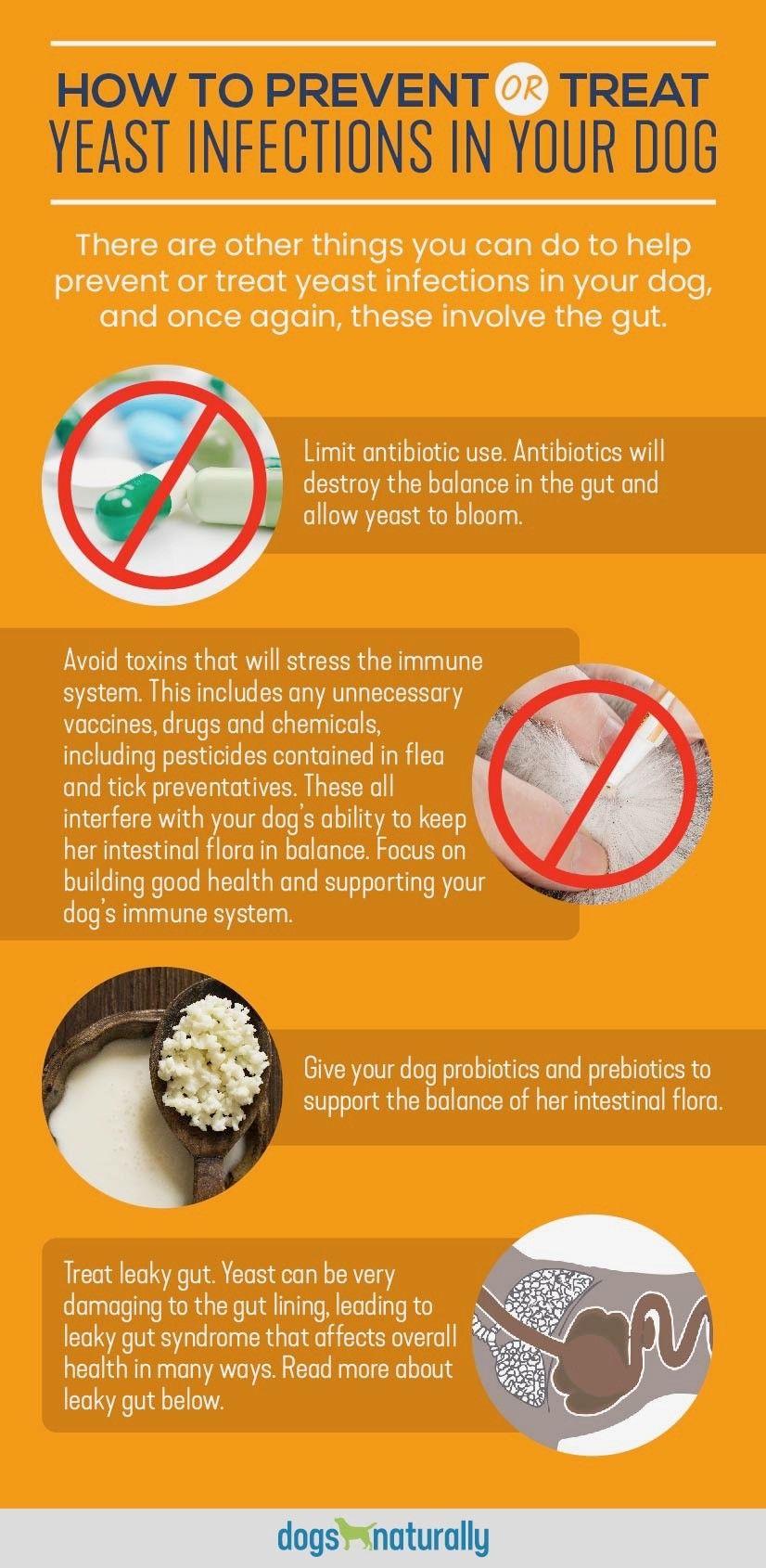 1570b0d78cc64d650a04c9349c2fa2d6 - How To Get Rid Of Yeast In My Dog