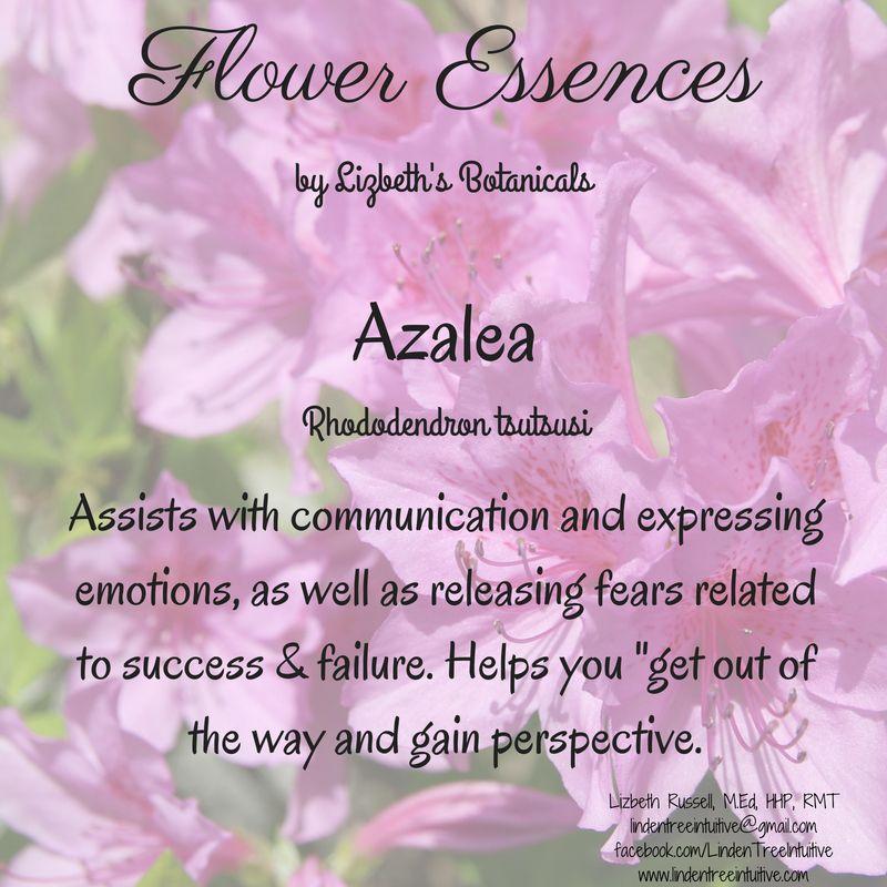 Azalea Flower Essences Expressing Emotions Success And Failure