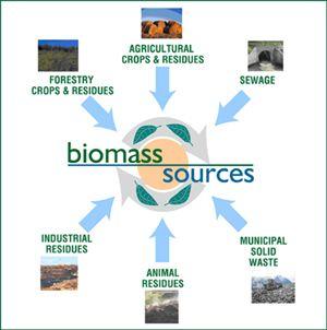Biomass Energy For Kids