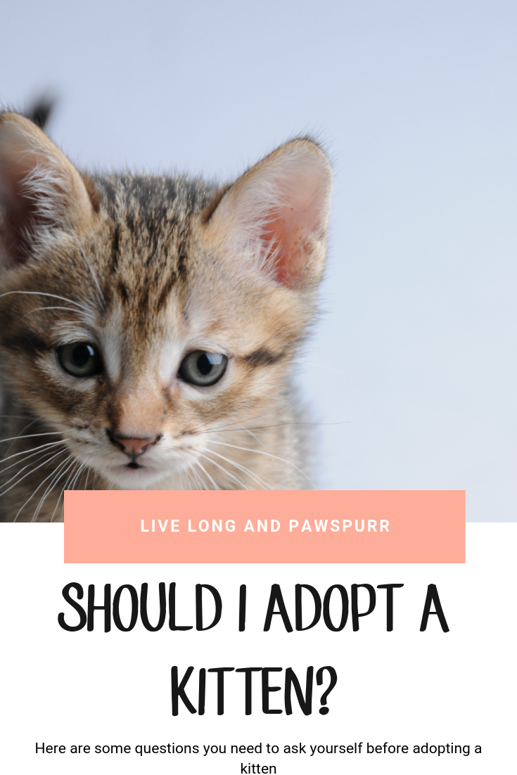 Should I Adopt A Kitten Nine Things To Consider Sick Cat Cats Kittens