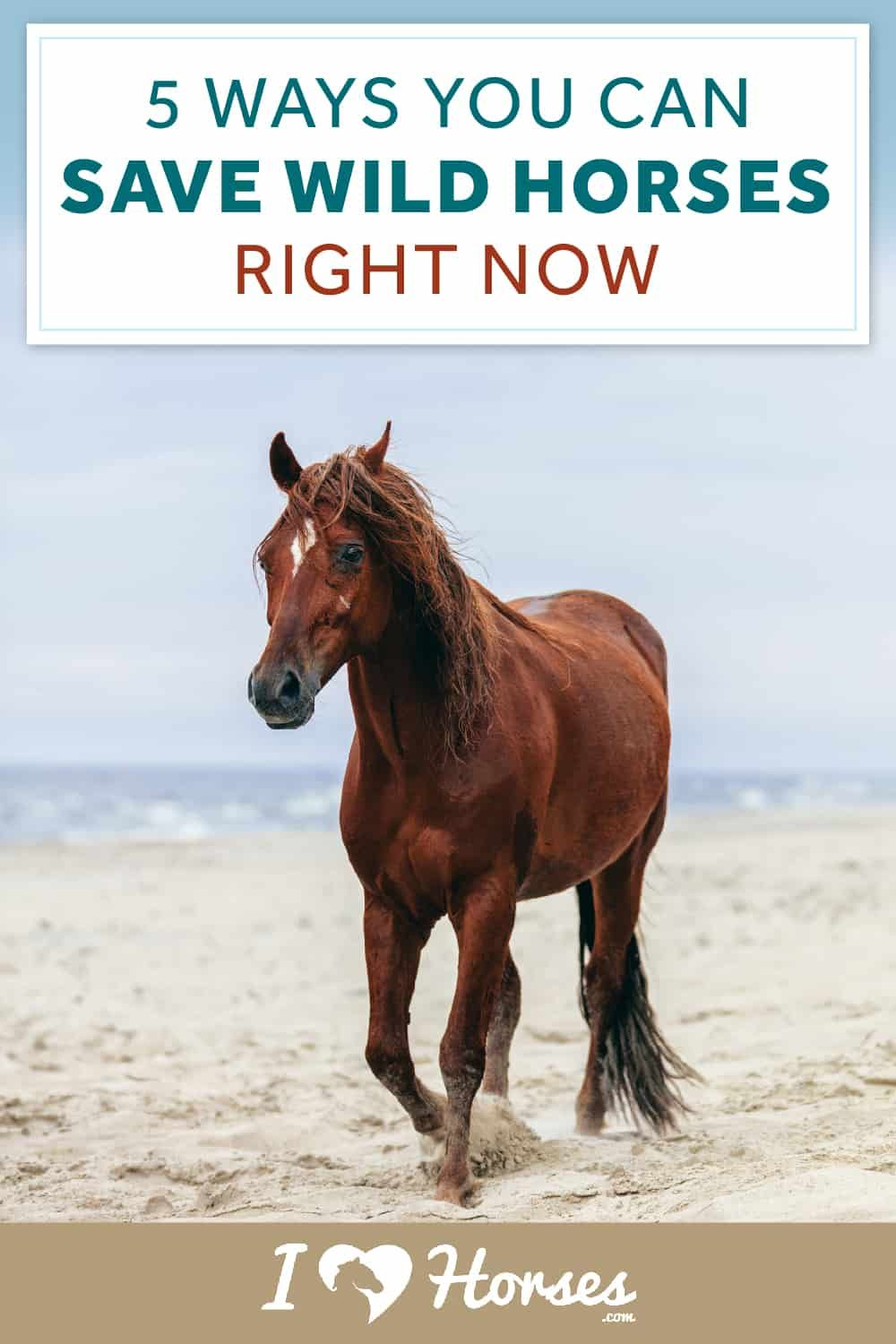 Pin On Horse Facts Horse Infographics