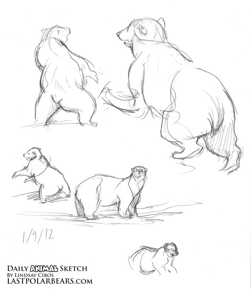 the last of the polar bears running drawing the human form