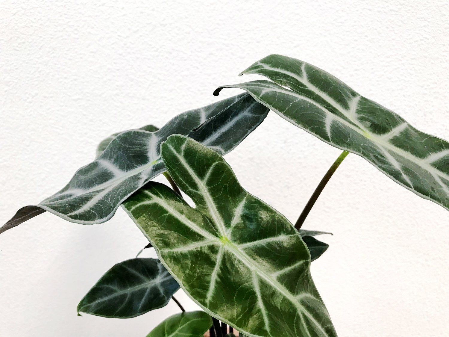 Round Up Our Favorite Less Common Indoor Plants Easyhouseplants The Paper Craft Pantry Round Up Of Best Uniq Common House Plants Plants House Plants Indoor