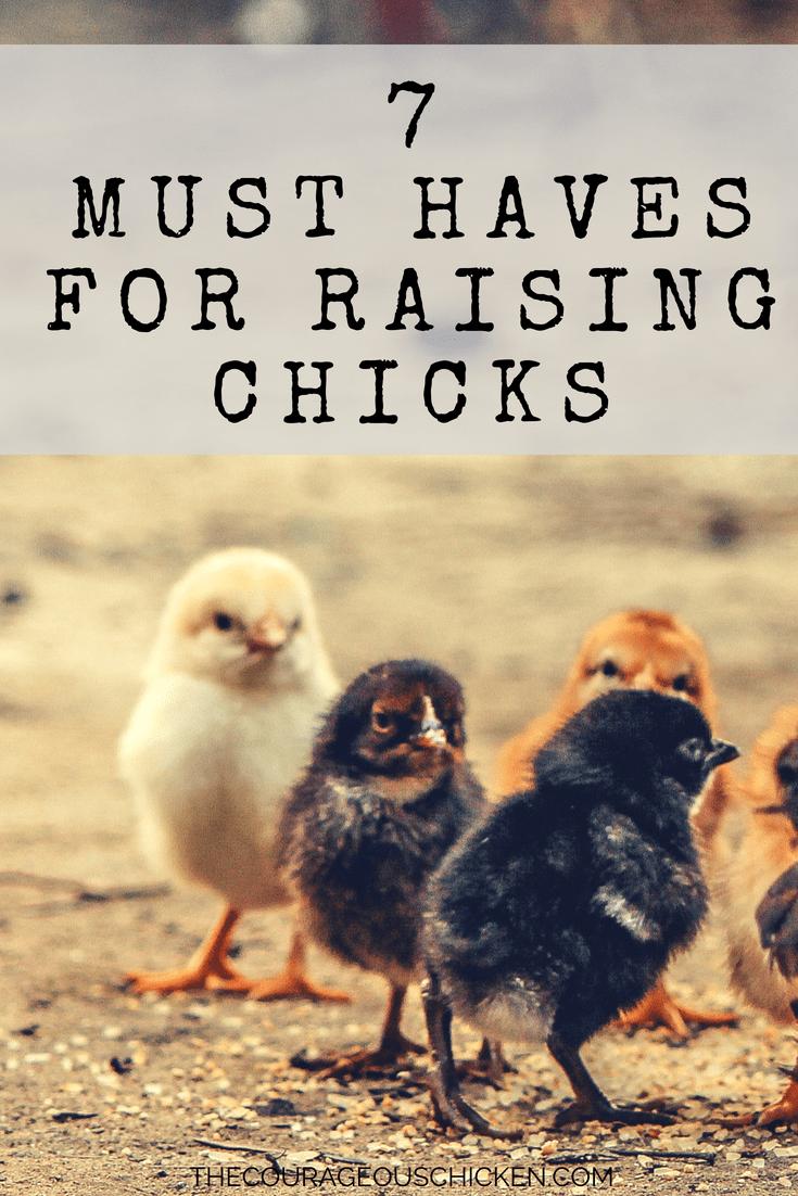 Are mistaken. Rasing chicks message simply