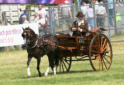 Photo Archive Royal Welsh Show Driving - Light Trade 2008 : Rainhill Welsh Cobs
