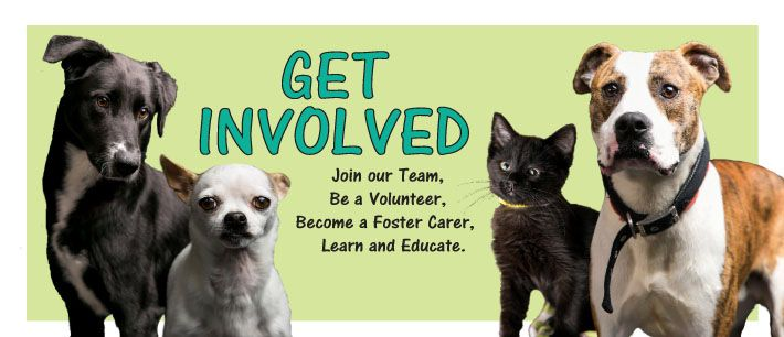 Get Involved Volunteer Humane Society Carer