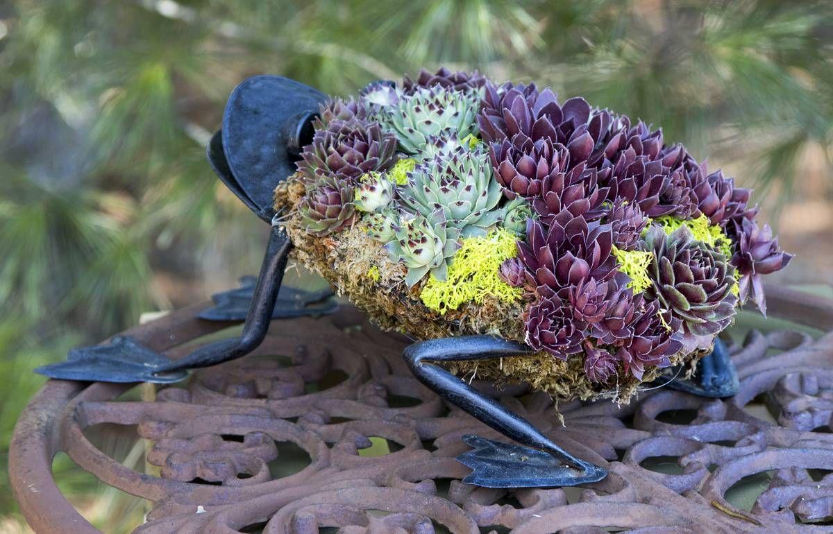 Ga succulent frog succlent plants pinterest topiary