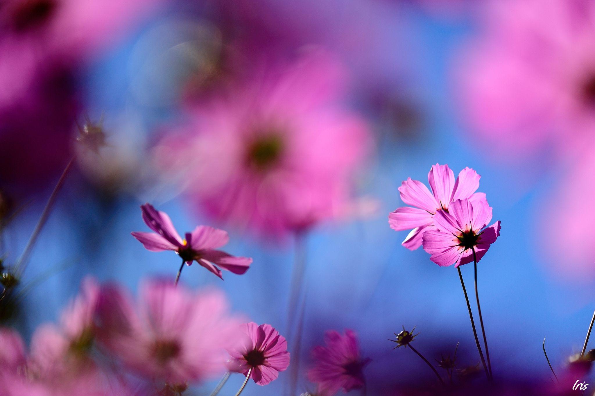Обои размытость, цветы. Цветы foto 13