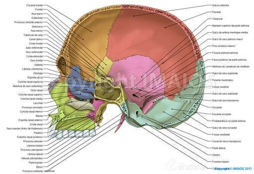 Cranial cavity - Cranial sutures | Anatomy | Pinterest