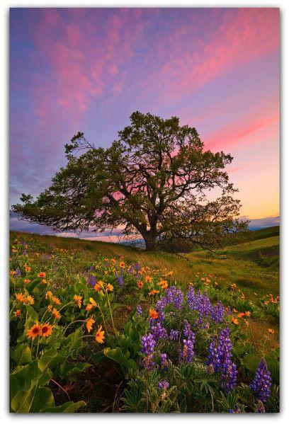 La Visualisation Ou L Image Apaisante Belle Nature Image Nature Paysage