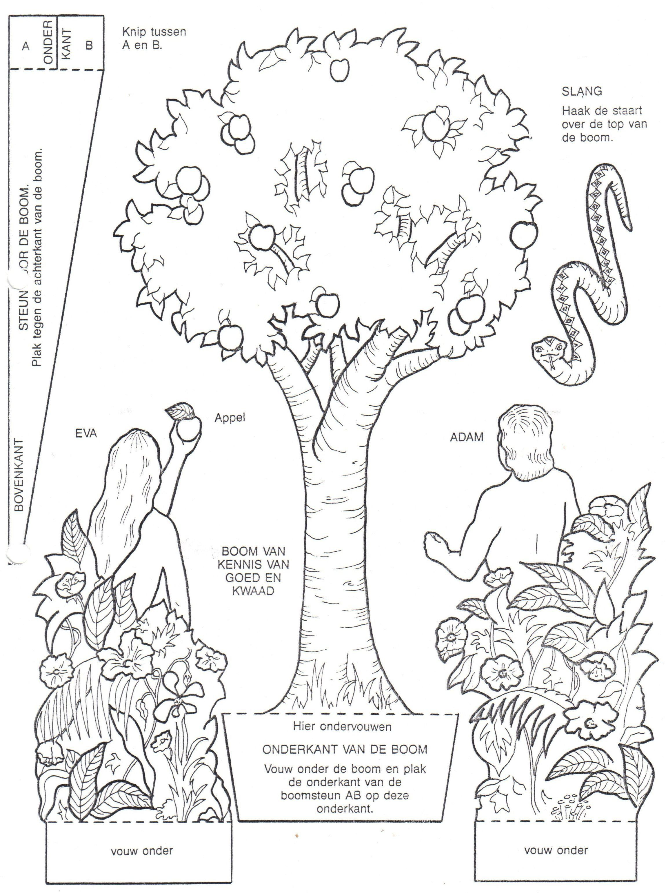 Adam And Eve Coloring Page Beautiful Adan Y Eva Bibliai Kifesta Sunday School Coloring Pages Bible Crafts For Kids Coloring Pages
