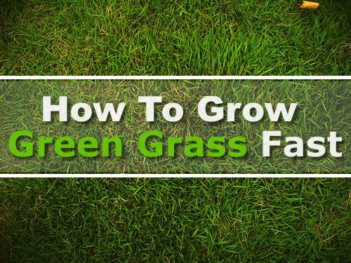 How To Grow Green Grass Fast Nice Thick Grass Anywhere In As