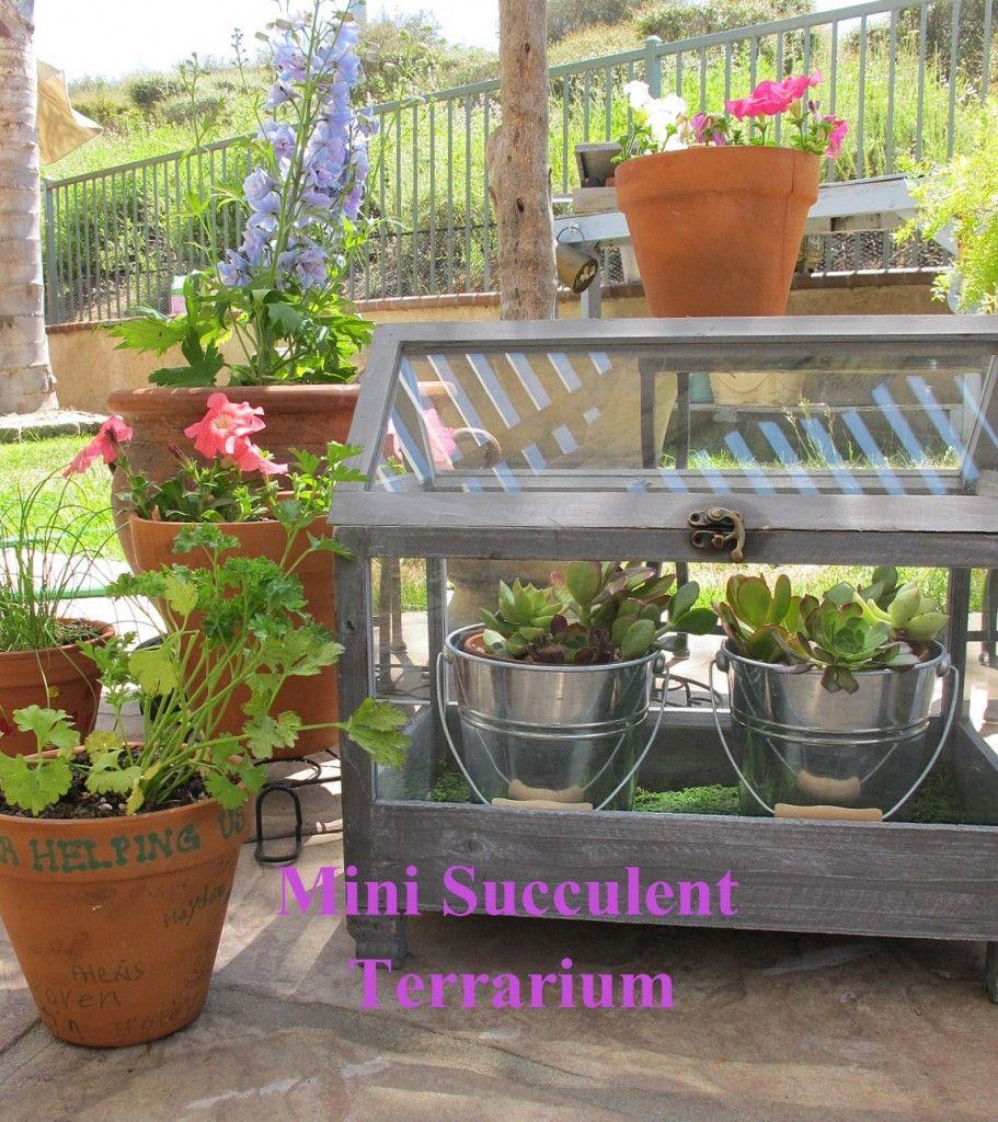 DIY miniature succulent terrarium - great advice on planting succulents.
